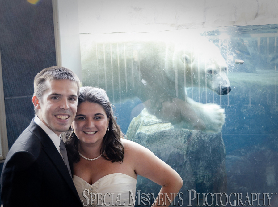 Toledo Zoo Polar Bear House wedding photograph Toledo OH